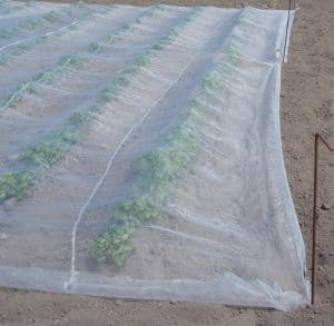 Mesh crop cover for potatoes