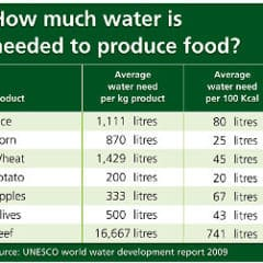 "The UNESCO World Water Development Report 2009 shows that potatoes use much less water than other carbohydrates. See Table below."" width=""290"" height=""251""The UNESCO World Water Development Report 2009 shows that potatoes use much less water than other carbohydrates. See Table below."