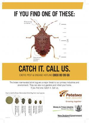 hot topics stinkbug a5 advert