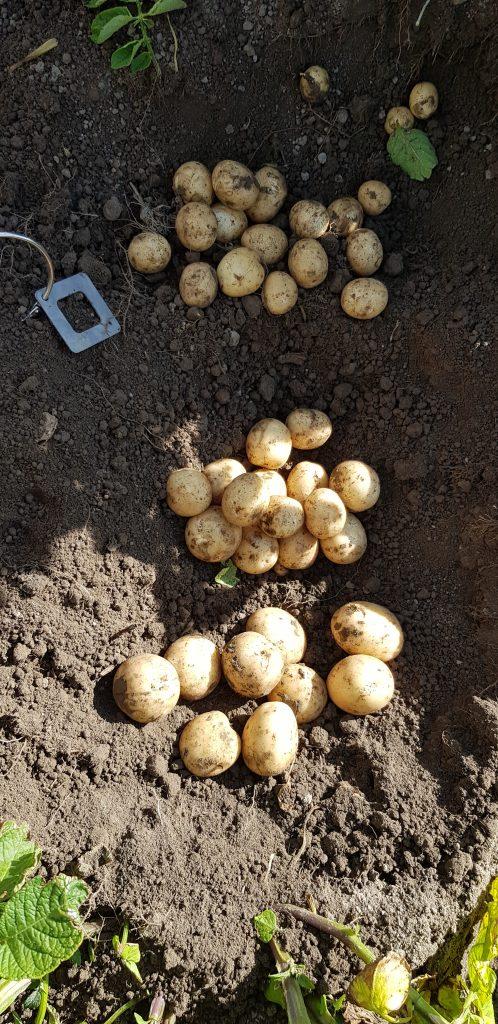 G 2 Annat Farms նոր լուսանկարներ 20200122 091948
